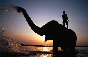 elephant_and_rider-resized-600